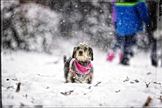 Snowy Weiner...