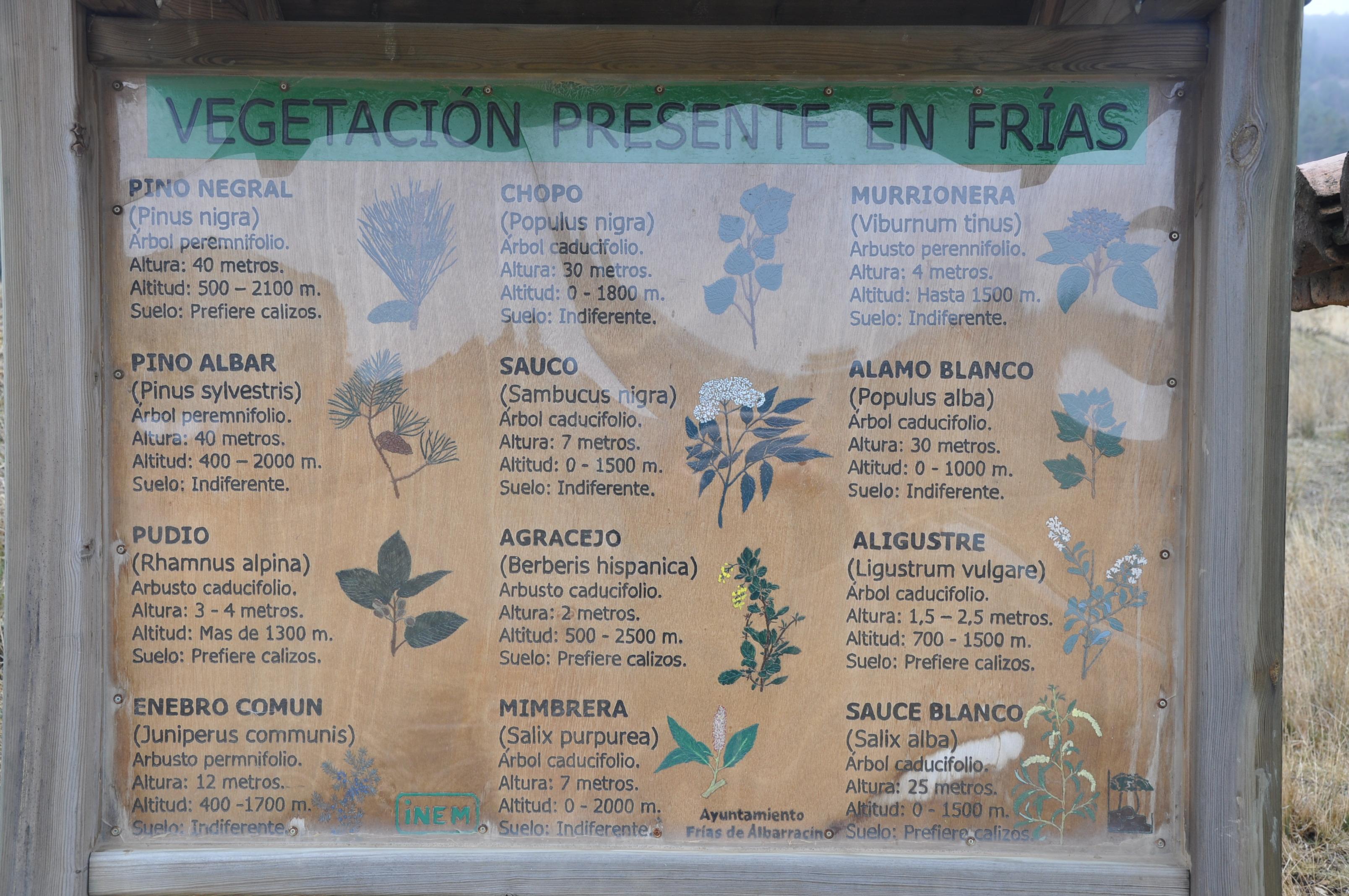 FRI_07_G. Coronado_ALRERAL 4