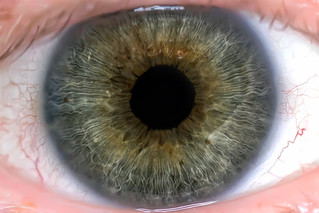 Eye Macro | by GingerSnapsPhoto