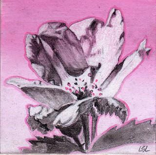 Flood Rose 2-lsl