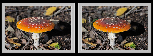 fly agaric fungi - 3d crossview