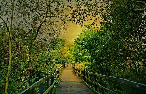 hope comfort goldensky boardwalk landscape trees plants texture topaz ngc npc saariysqualitypictures