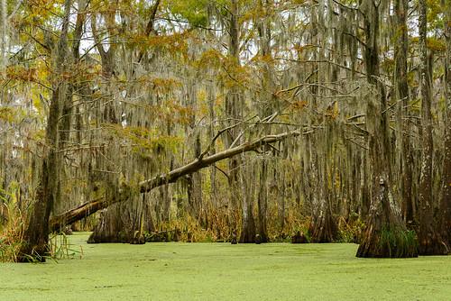 usa slidell louisiana swamp