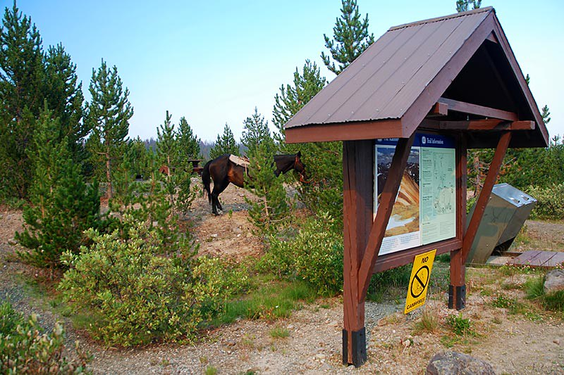 Horses tethered at the Rainbow Range Trailhead in Tweedsmuir South Provincial Park, Chilcotin, British Columbia