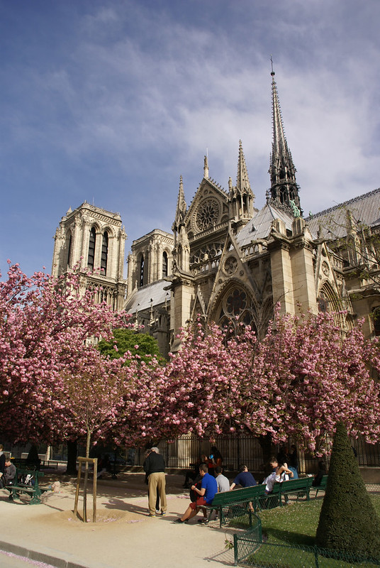 Cathédrale Notre Dame de Paris In the Pink