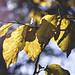 autumn light by szlavid