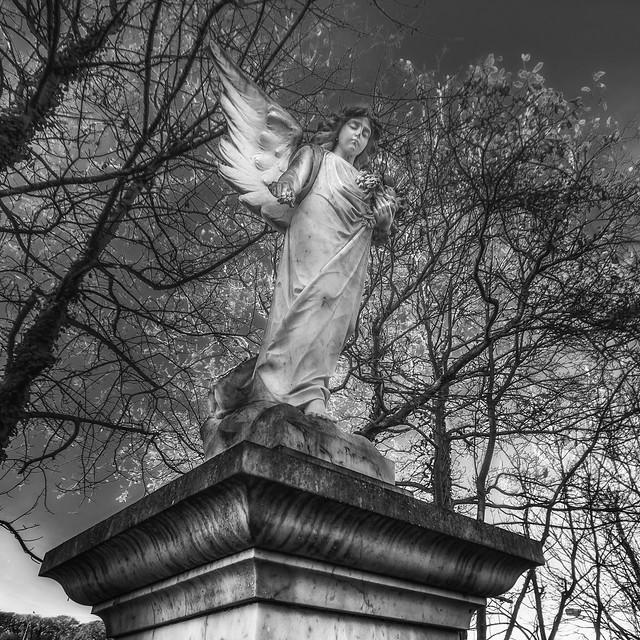 Look up sweet angel