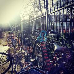 bikes #wassenaar
