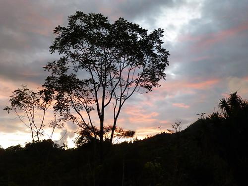 trees sunset sky naturaleza nature costarica árboles cielo cedro itabo