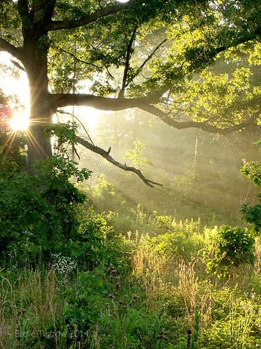 trees light rural sunrise dawn scenery country oaktree oakopenings northwestohio lucascounty toledometroparks