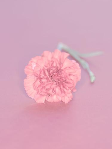 Image 247 | by studio mixture