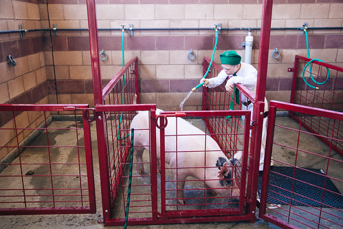 Washing Down The Piggie   by shaycam