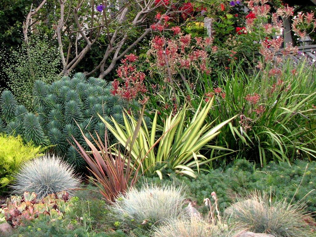 A local Berkeley garden