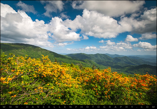 springflowers northcarolina tennessee roanmountain flameazaleas landscape nature outdoors nc tn appalachiantrail appalachians blueridgemountains wnc roan roundbald azaleas flowers outdoorphotographer scenic adventure hike