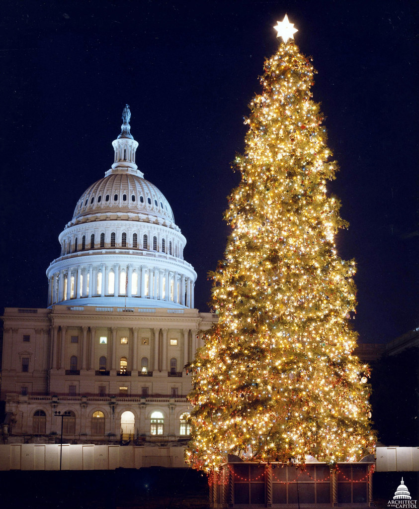 Capitol Christmas Tree.1991 U S Capitol Christmas Tree The 1991 Tree Was A 60 Fo