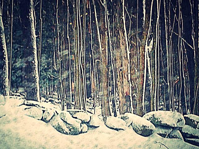 Snowy Forest in NE