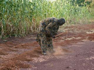 photo-sorghum-field_Yacouba-Sawadogo_Chris-Reij | by World Resources