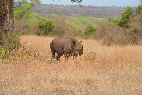20131020-Black-Rhino-39 | by gideonariel1