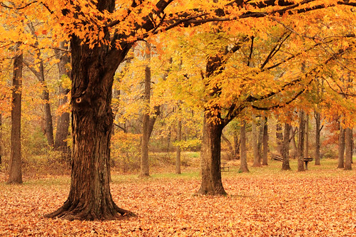 park autumn tree fall leaves pennsylvania foliage buckscounty tinicum erwinna tinicumpark