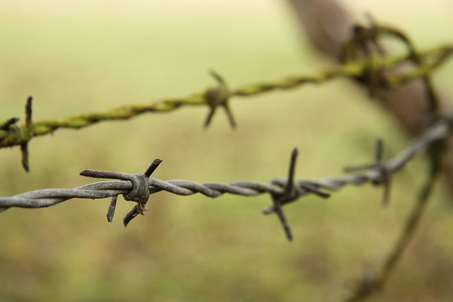 Bouquet of barbed wire [Explored]