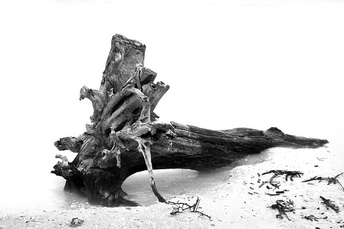 Tree trunk driftwood | by Alderman Company Photography