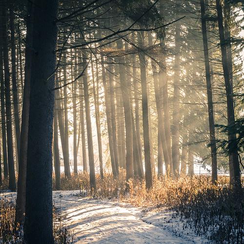 mist snow tree fog haze path newyear 2014 mortonarboretum sunriselight