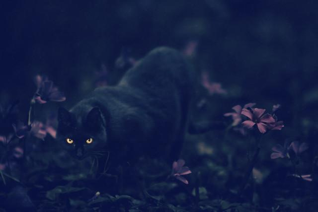 el gato de Verdaguer