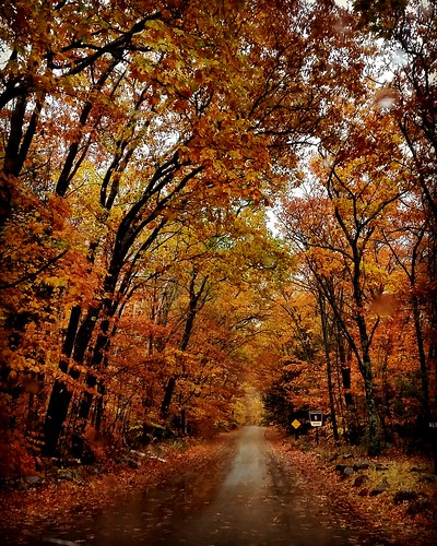 autumn road fall fallfoliage nature landscape street red orange newhampshire newengland season weather weatherphotography rain
