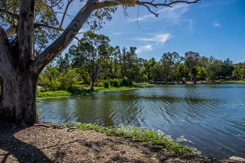 ca california clouds santaclaracountyparks trees water vasonalakecountypark nature losgatos afternoon sky park lake recreational outdoor shore unitedstates us