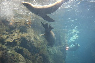 Osaka Aquarium Kaiyukan   by MatthewW