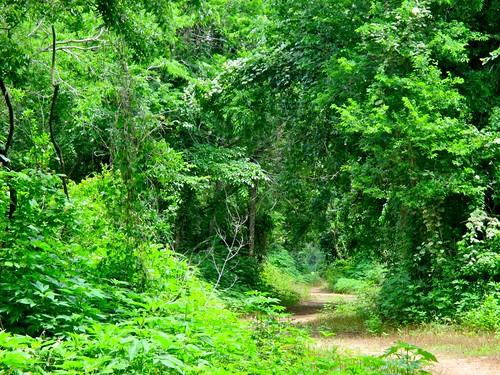spring texas heat sugarland 31c wildernesstrail 88f ahobblingaday cullinanpark 93humidity josephsandluciehcullinanpark