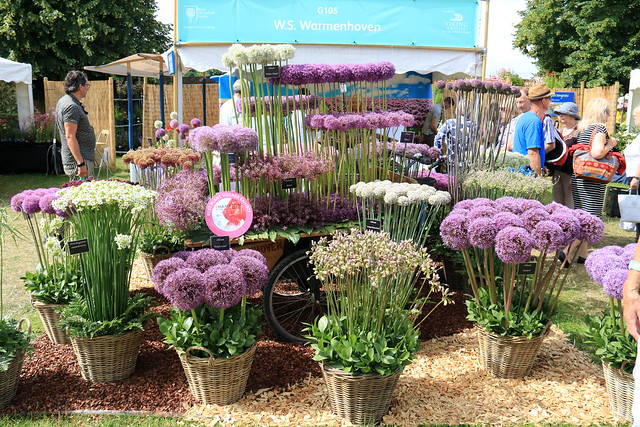 Hampton Court Flower Show 2016