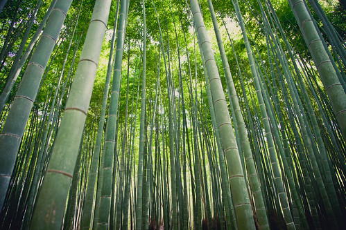 Bamboo Forest | by camknows