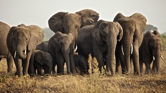 Een hoopje olifant