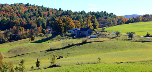 autumn trees fall landscape vermont cows farm country newengland hills land jennefarm readingvt