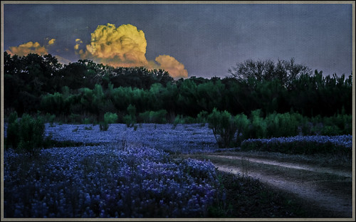 blue sunset clouds dark spring texas dusk tx wildflowers hillcountry bluebonnets marblefalls spicewood muleshoebendrecreationarea