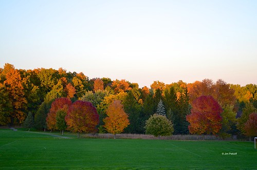 autumn trees ny color fall foliage