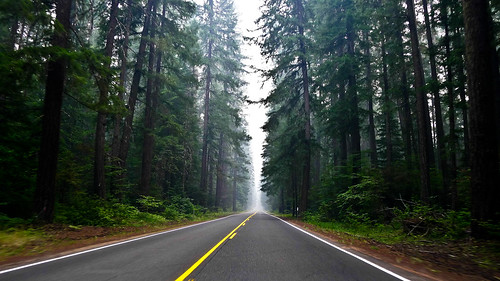 Redwoods | by jareed