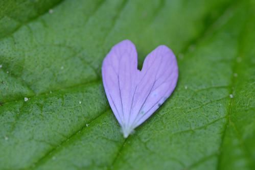 Purple heart | by Rene Mensen