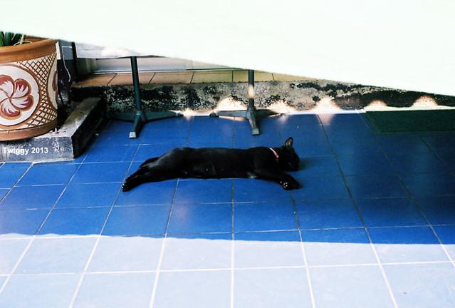 z z Z......lazy afternoon