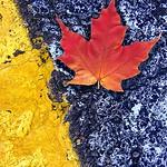 yellow+leaf