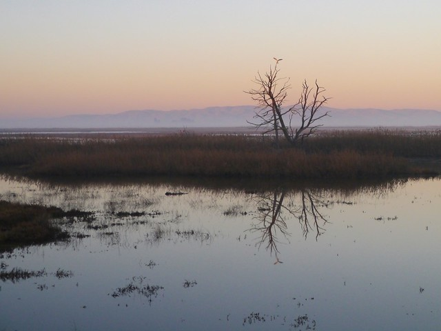Dawn at Suisun Marsh iv