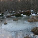 Swamp Ice