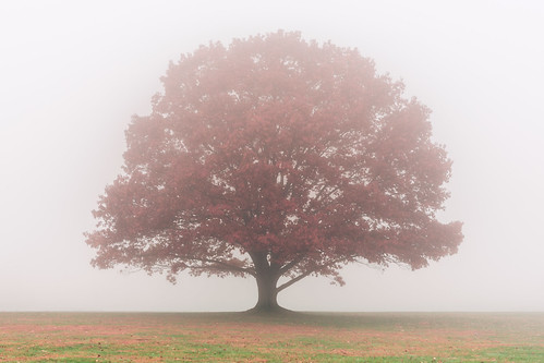 autumn landscape tree northamerica colonialpark newjersey fog unitedstates somersetcounty somerset franklintownship fall park usa us