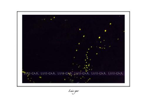Vía Lactea