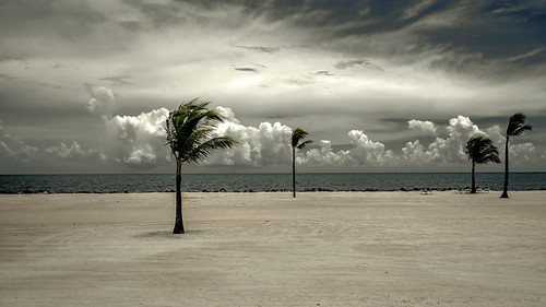 ocean vacation storm tree beach clouds keys sand day wind florida largo palmetto