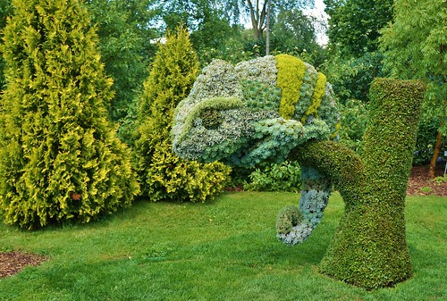 Chameleon topiary of Echeveria, Alternanthera (2) | by KarlGercens.com GARDEN LECTURES
