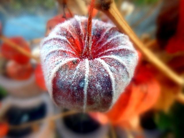 Frosty lampoon