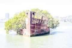 SS Ayrfield Shipwreck-9
