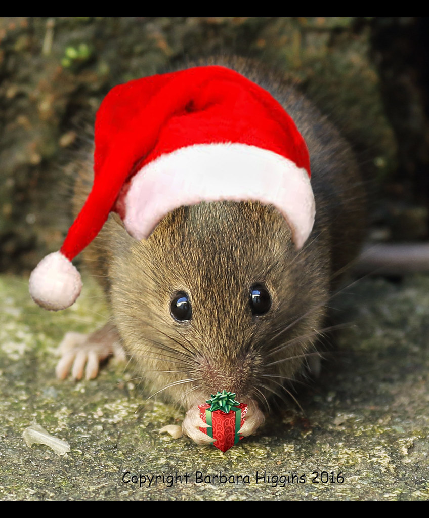Christmas Mouse.The Christmas Mouse Tandikes Flickr